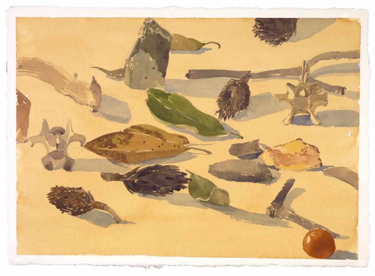 Watercolor of leaves and pinecones by Deborah Kirklin